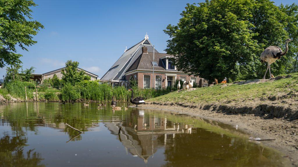 Hoeve-Noordveld-6-6-18-04081.jpg