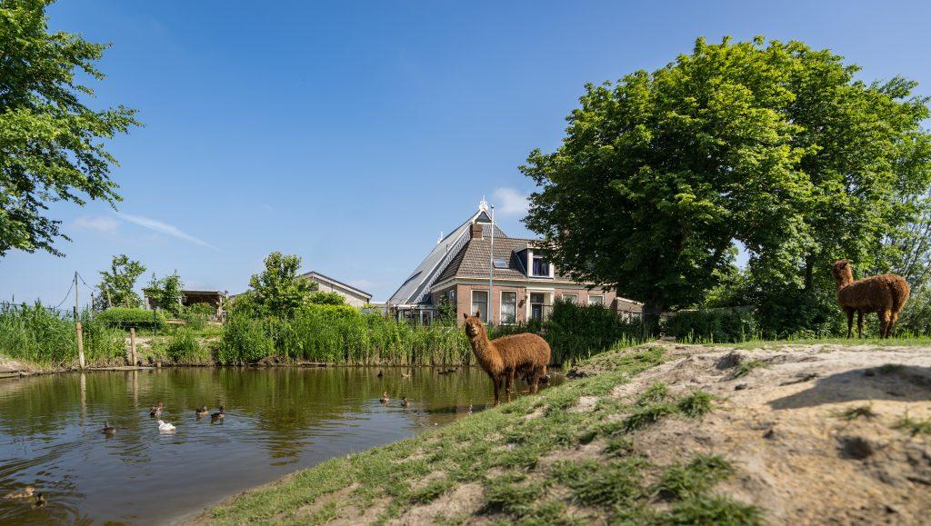 Hoeve-Noordveld-6-6-18-04084.jpg