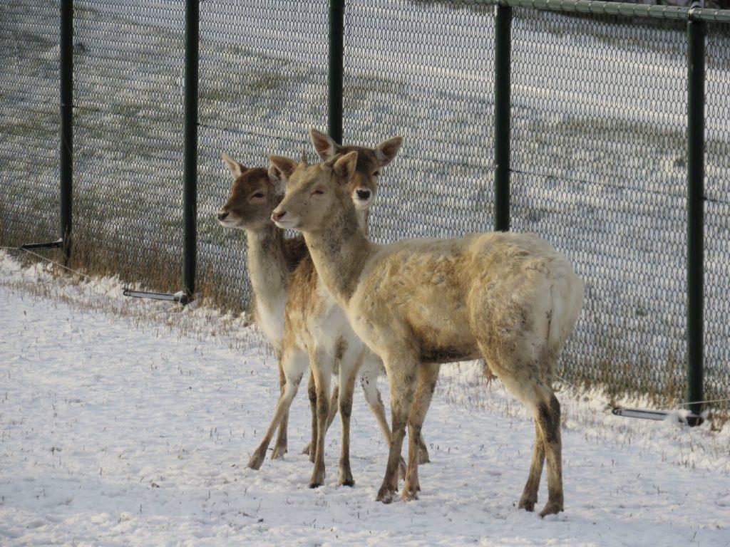 winter-2018-park-50-van-114-e1519765758950.jpg